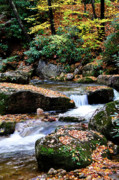 Trout Photo Posters - Autumn Rushing Mountain Stream Poster by Thomas R Fletcher