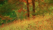 Fall Grass Posters - Autumn Scene in the Forest Poster by Yali Shi