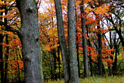Michigan Fall Colors Posters - Autumn Poster by Scott Hovind