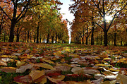 Autumn Colours Photos - Autumn sheets carpet by Bruno Santoro