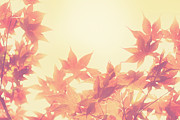 Japanese Maple Posters - Autumn Sky Poster by Amy Tyler