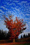 Cathy  Beharriell - Autumn Sky Drama