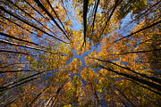 Autumn Sky Print by Mircea Costina Photography