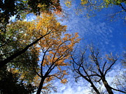 Nature - Autumn Skyscape by Frank Romeo