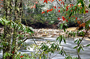 Cranberry Prints - Autumn Snow Cranberry River Rhododendron Print by Thomas R Fletcher