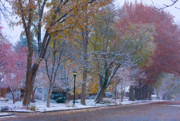 Autumn Prints Photo Prints - Autumn Snow Print by James Bo Insogna