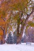 Autumn Prints Prints - Autumn Snow Park Bench   Print by James Bo Insogna