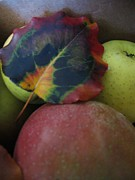 Apple Orchards Prints - Autumn Splendor Print by Deb Martin-Webster