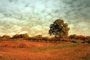 Battlefield Photos - Autumn Splendor In The Orchard - Battlefield Orchards by Angie McKenzie