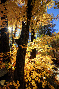 Fall Colors Autumn Colors Posters - Autumn Splendor  Poster by Saija  Lehtonen