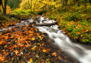 Wahkeena Creek Framed Prints - Autumn Split Framed Print by Mike  Dawson
