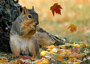 Squirrel Mixed Media - Autumn Squirrel by Susan Schwarting