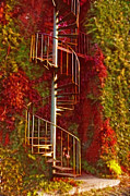 Cheryl Cencich Photography Framed Prints - Autumn staircase Framed Print by Cheryl Cencich