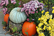 Outdoor Still Life Art - Autumn Still Life II by Suzanne Gaff