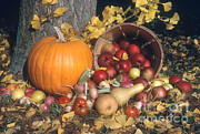 Food And Beverage Prints - Autumn Still Life Print by Photo Researchers, Inc.