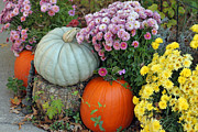 Outdoor Still Life Art - Autumn Still Life by Suzanne Gaff