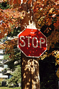 Autumn Leaves Art - Autumn Stop Sign by John  Mitchell