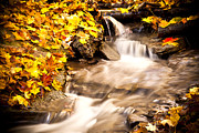 Yellow Leaves Framed Prints - Autumn Stream No 1 Framed Print by Kamil Swiatek