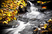 Red Leaves Acrylic Prints - Autumn Stream No 2 BW Acrylic Print by Kamil Swiatek