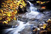 Falling Leaves Framed Prints - Autumn Stream No 2 Framed Print by Kamil Swiatek