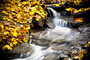 Yellow Leaves Framed Prints - Autumn Stream No 3 Framed Print by Kamil Swiatek