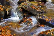 White Water - Autumn Stream North Georgia by Bruce Gourley
