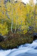 Waterfalls Rivers And Lakes - Autumn Stream by Quincy Dein - Printscapes