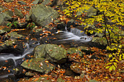 Smokey Mountains Photo Framed Prints - Autumn Stream-Smokey Mountains Framed Print by Stephen  Vecchiotti