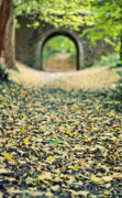 Arch Bridge Prints - Autumn Stroll Print by Meirion Matthias