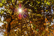 Fall Photographs Prints - Autumn Sunburst Print by Carolyn Marshall
