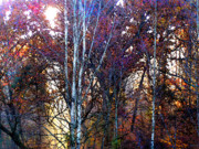 Autumn Woods Metal Prints - Autumn Sunlight Metal Print by Jane Schnetlage