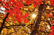 Sunlight Mixed Media Posters - Autumn Sunrise Painterly Poster by Andee Photography