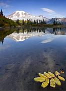 Mt Rainier Framed Prints - Autumn Suspended Framed Print by Mike  Dawson