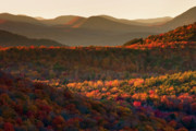 Adirondacks Posters - Autumn Tapestry Poster by Neil Shapiro