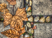 Chromatic Photo Posters - Autumn Texture Poster by Wayne Sherriff