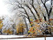 Marilyn Hunt - Autumn to Winter