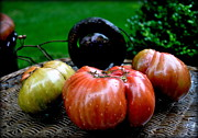 Tanya  Searcy - Autumn Tomatoes