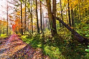 Fall Cards Prints - Autumn Trail Print by Debra and Dave Vanderlaan