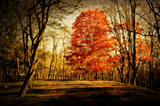 Kathy Jennings Prints Framed Prints - Autumn Trail Framed Print by Kathy Jennings