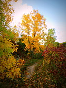 Kkphoto1 Prints - Autumn Trail Print by Kay Novy