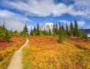 Mt Rainier Framed Prints - Autumn Trail Framed Print by Mike  Dawson