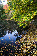 Beautiful Posters - Autumn tree colors in Central Park in New York City Poster by Ellie Teramoto