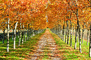 In A Row Metal Prints - Autumn Tree Metal Print by Julien Fourniol/Baloulumix