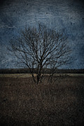 Rural Decay Posters Photos - Autumn Tree by Larysa Luciw