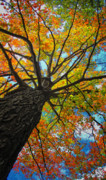 Autumn Tree Print by Peg Runyan