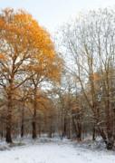Autumn Tree Print by Svetlana Sewell