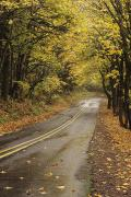 Outdoor Canopy Posters - Autumn Tree Tunnel Poster by Greg Vaughn - Printscapes