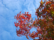 Red Leaves Acrylic Prints - Autumn Trees art prints Blue Sky White Clouds Acrylic Print by Baslee Troutman Photography Art Prints