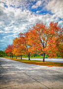 Saint Charles Prints - Autumn Trees At Busch Print by Bill Tiepelman