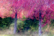 Blurry Prints - Autumn Trees Print by Carol Leigh